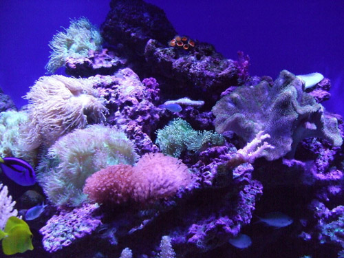 珊瑚有诸多环境限制