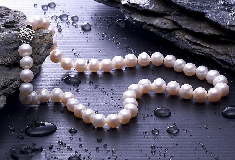 海水养珠与淡水养珠